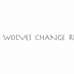 The Wolves Returned To Jellystone- Watch The Result