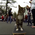 World's Best Skateboarding Cat!