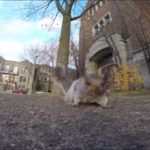A Squirrel Stole My Go Pro Camera